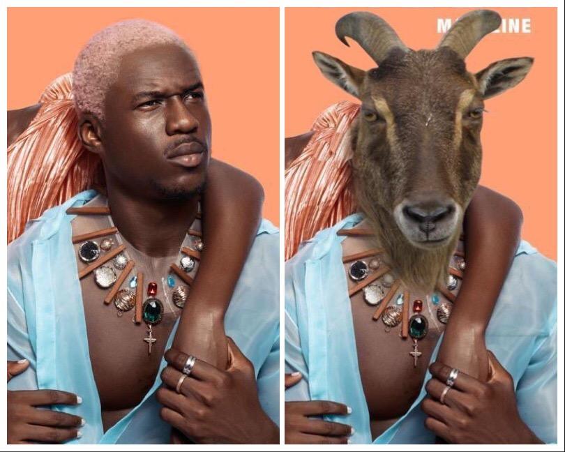 Joey B Goat
